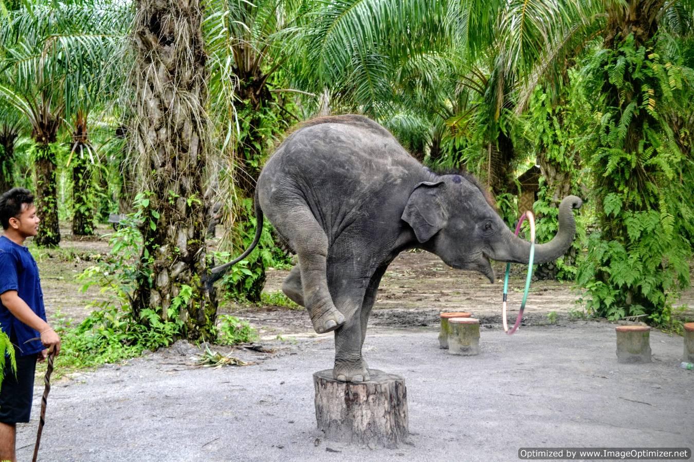 Krabi Thailand elephant trekking plimbare pe elefant