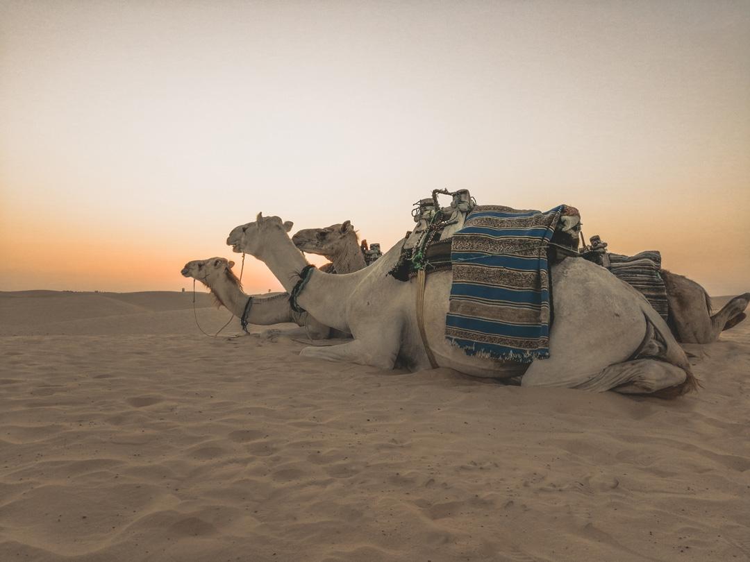 Ce trebuie să știi înainte de a merge în Tunisia